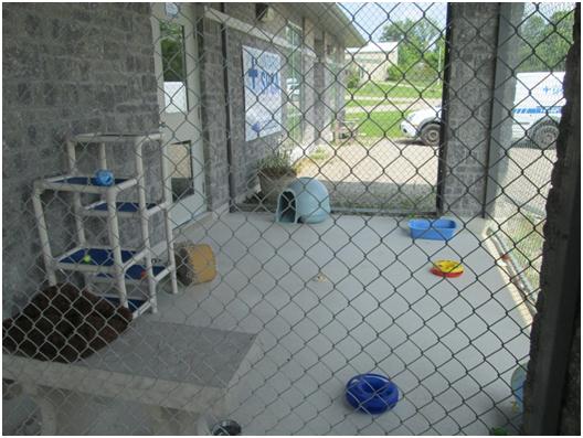 outdoor cat play area