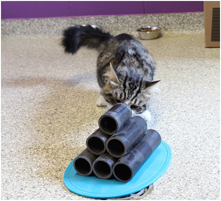 cat examining pile of tubes