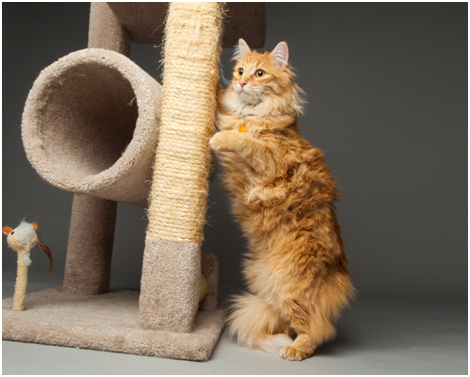 cat playing with cat tower