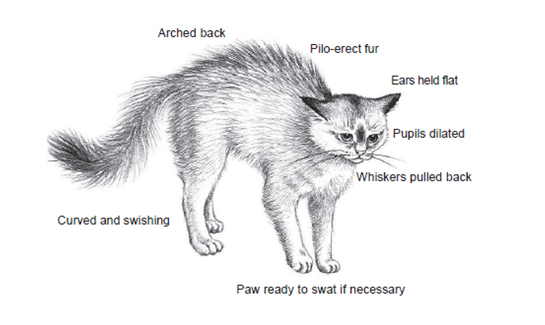 cat diagram arched back, recognizing stress, stressors in pets