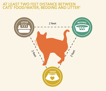 distance image for cat care