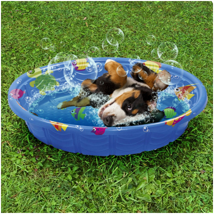 dog playing in small pool