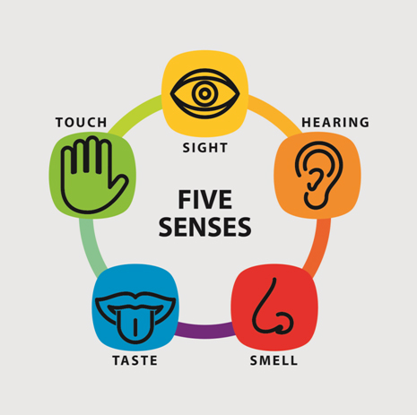 five senses image