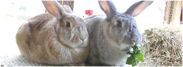 rabbit food balls