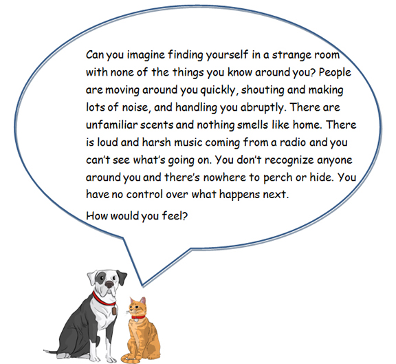 dog and cat speech bubble