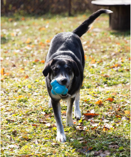 dog outside with toy