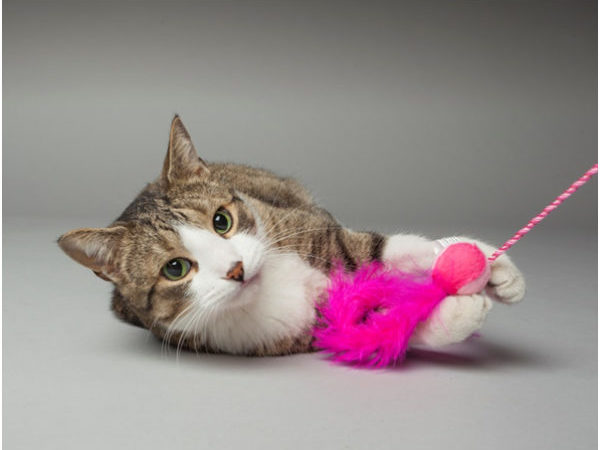 cat playing with pink toy, holiday gifts, holiday gift ideas