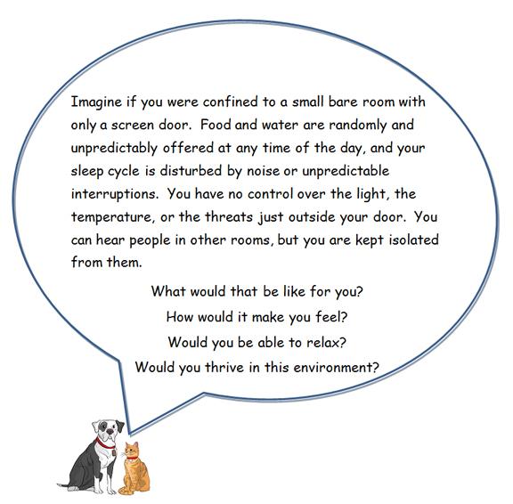 dog and cat speech bubble enrichment