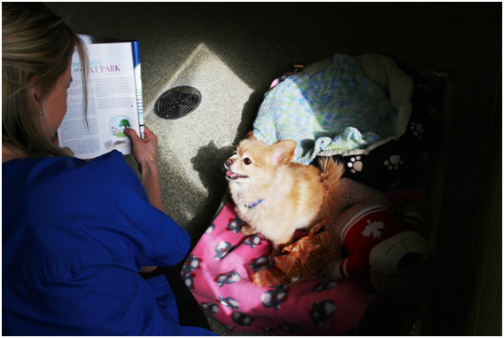 reading to a shelter dog
