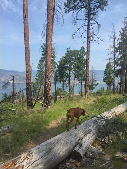 dog outside, hike, hiking, road-trip