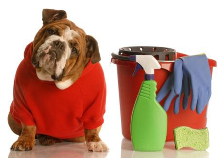 dog beside cleaning pail