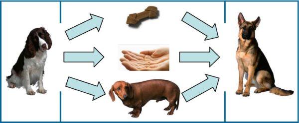 animal to animal transmission