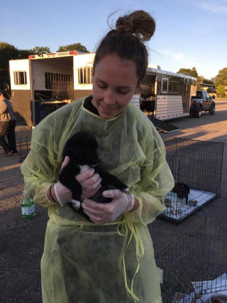 Ontario SPCA dog transport, puppy, puppies, northern puppies