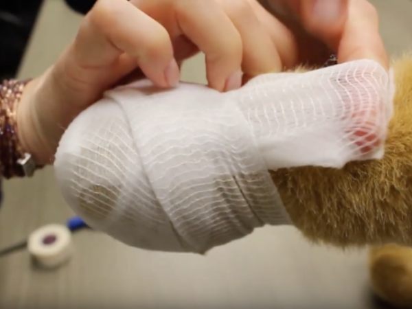 how to bandage your pet's paw, pet first aid