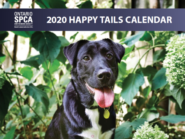 happy tails calendar, 2020, animal rescue