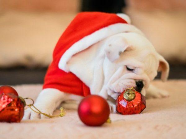 holiday pet safety tips, holiday season, pet safety
