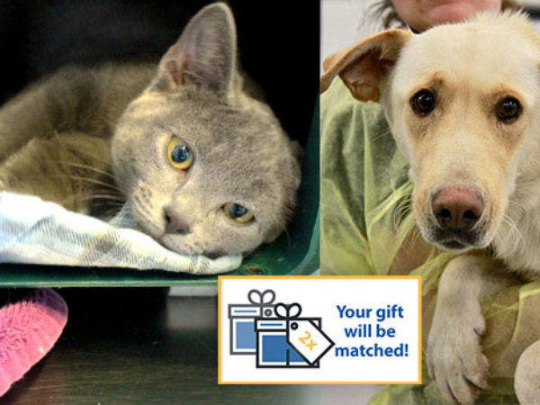 Giving Tuesday - gift match