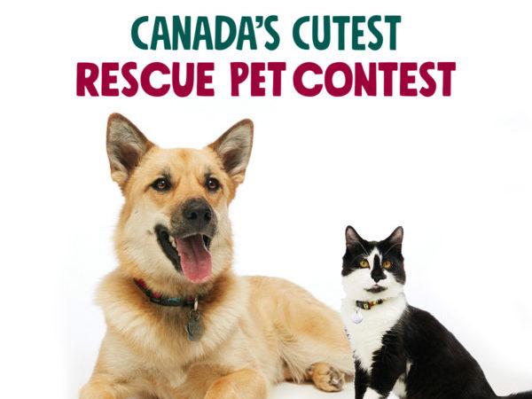 iAdopt for the Holidays, Canada's Cutest Rescue Pet Contest