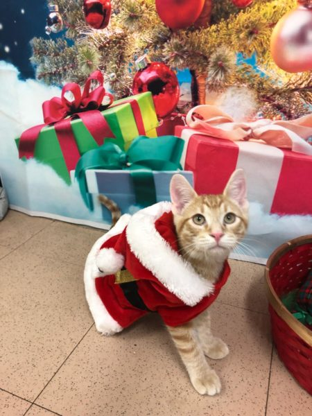 loving home, iAdopt for the holidays, cat for adoption, rescue a shelter cat
