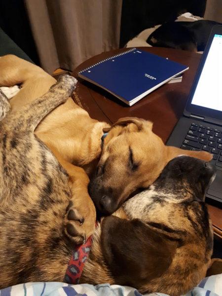 cuddle up, iAdopt, canada's cutest rescue pet