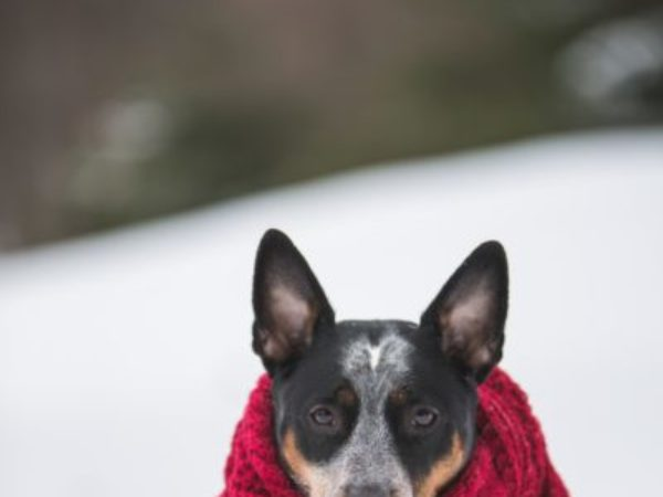 dog wearing scarf in the snow, pet ownership tips, Ontario SPCA winter tips