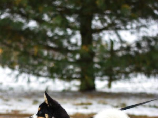 protect paws, paw tips, white and black puppy, puppy, winter, snow, cold weather