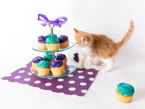 kitten sniffing cupcakes