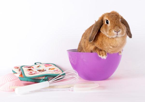 bunny, national cupcake day