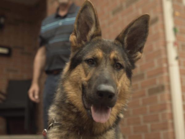 Nakita, service dog, Shepherd, Dan Gagne