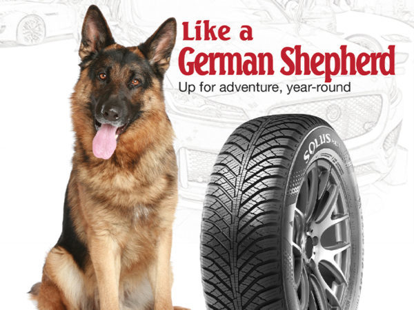german shepherd with winter tire