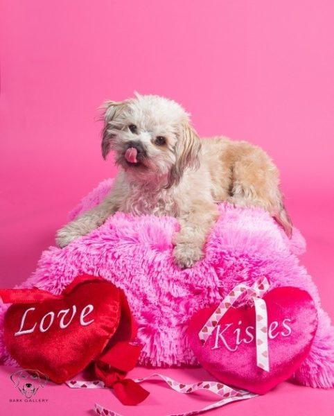 Valentine's Day photo shoot, cupcake day