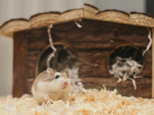small-animal-enrichment-mouse-hamster