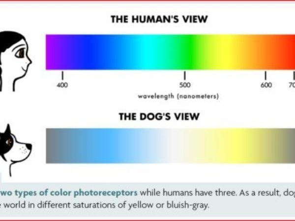 how dogs see the world, colour spectrum, dog eyesight