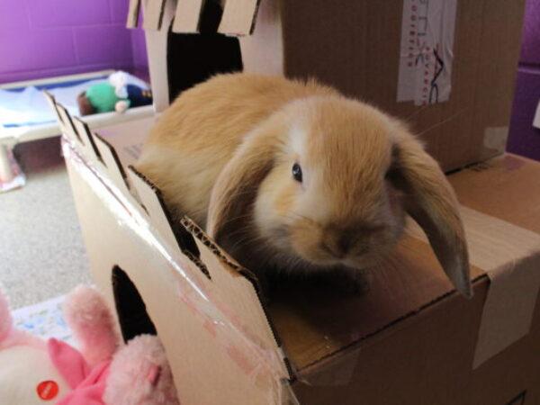 baby pet rabbit, rabbits, bunny. rabbit pet tips