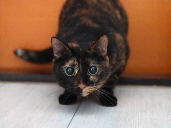 clicker training, cat training