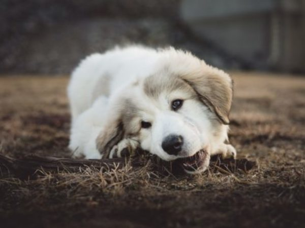 how to, destructive chewing, chew, shelter health pro