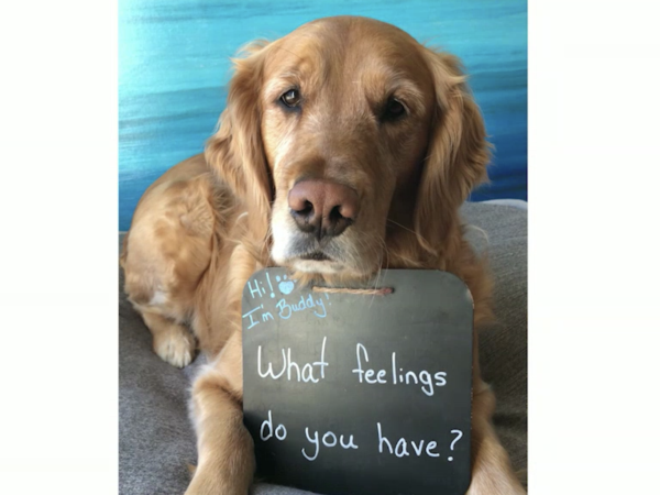 animalsmart™, Buddy asks a question, animalsmart, primary lesson