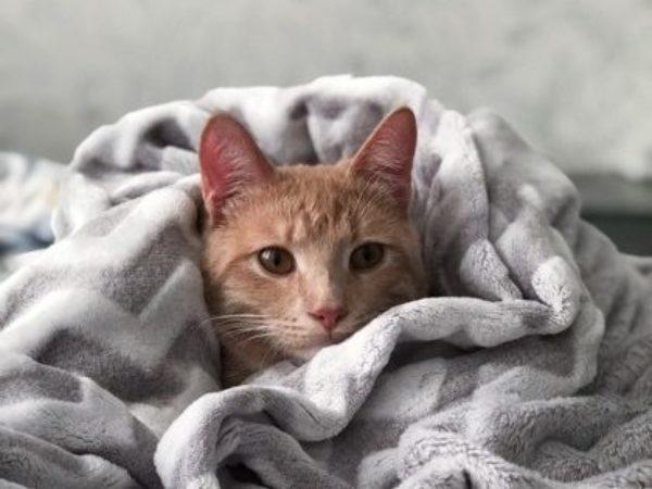 cat wrapped in blanket, indoor activities