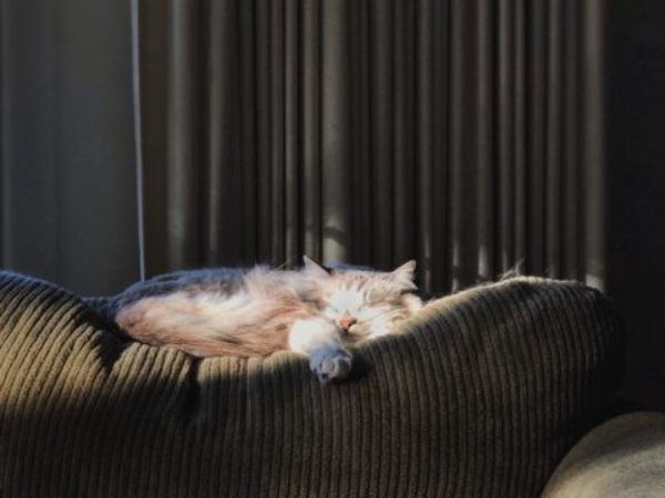 emergency planning, emergency preparedness week, cats on a couch