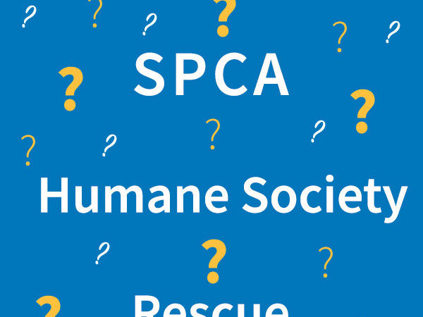 SPCA, humane society, rescue, what's in a name