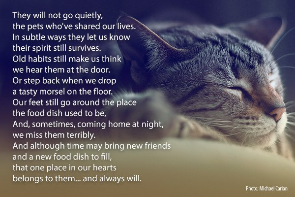 world pet memorial day, poem