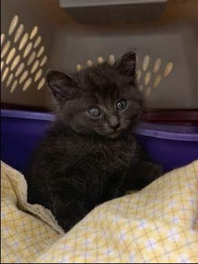 Quit Kitten Around Join Now Ontario Spca And Humane Society