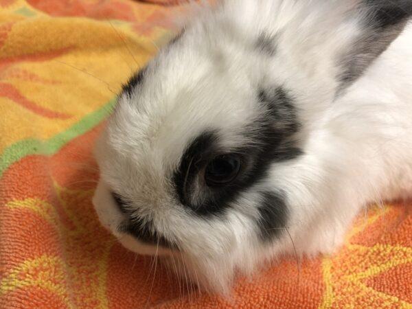 rabbit, urgent appeal
