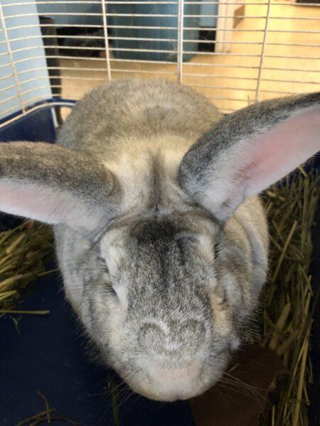 rabbits, urgent appeal
