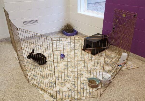 rabbit x-pen, rabbit pet care, rabbit adoption