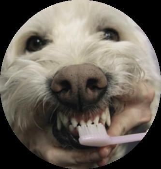 dog, teeth, tip, veterinarian, pet healthy