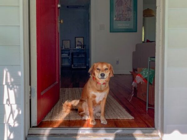 bringing new dog home, dog adoption tips