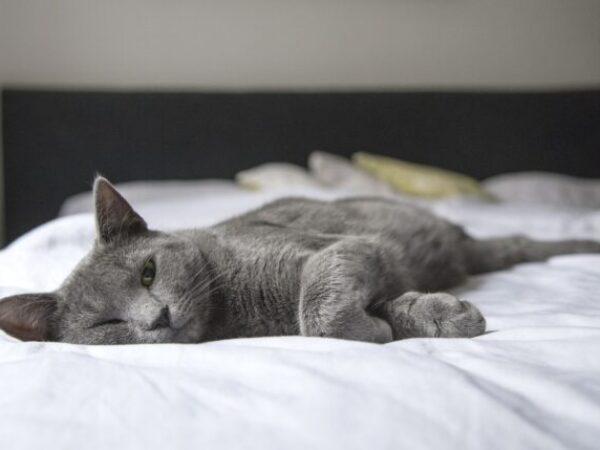 indoor cat, royal canin canada