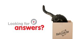 stay curious, cat pet care, cat behaviour