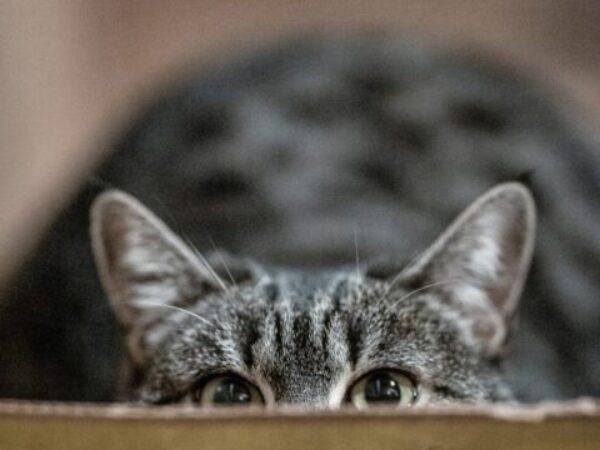 cat visits vet, fear free